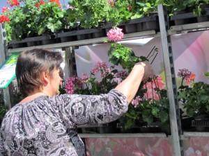 Blumenbörse (18)
