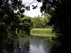 Gewässer im Mühlenbruch. Foto: Biologische Station des Kreises Unna