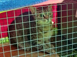 Eine vom Tuerschutzverein Kamen am Seniorenhaus Sophia in Weddinghofen eingefangene Katze.