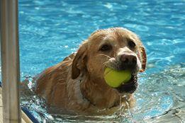 Für alle Hunde müssen Steuern gezahlt werden - auch für die braven.