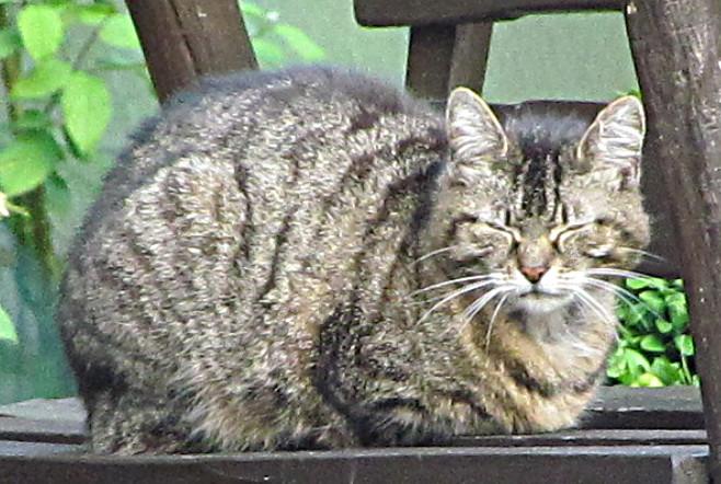 Katzen, die sich nicht nur in der Wohnung, sondern auch draußen aufhalten, müssen schon bald kastriert werden.