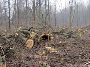 Stadtwald1