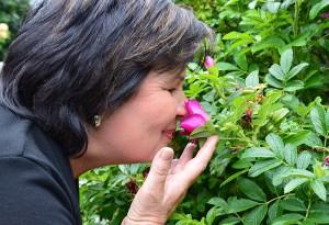 Verführerisch: Duftende Rosen auf Hof Brandt.