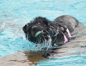 Auch mit zwölf Jahren ist Luna noch ein echter Schwimmprofi.