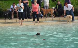 Hundeschwimmen im Wellenbad Weddinghofen.