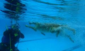 Auch spannend: Die Perspektive Unterwasser vom Profifotografen eingefangen.