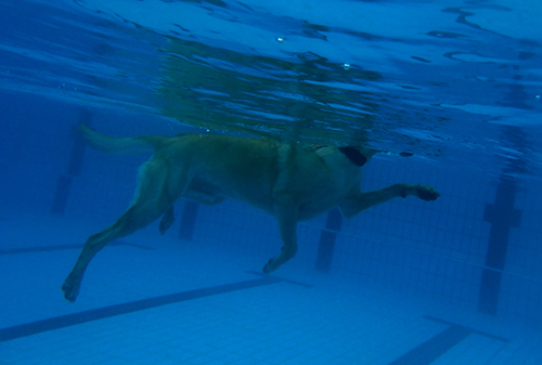 Hunde38