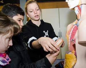 Ran an die menschlichen Organe hieß es im Bioraum.