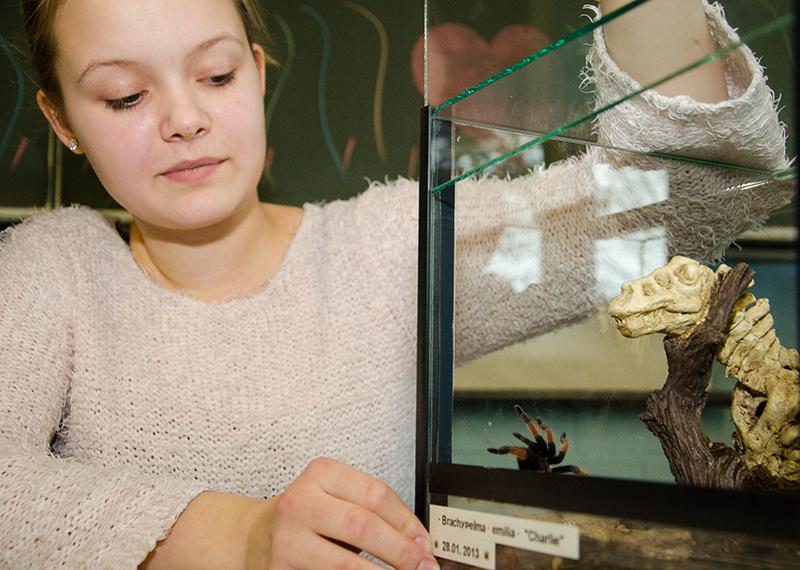 Charlie, die Vogelspinne, war der Star im Streichzelzoo beim Tag der offenen Tür des Städtischen Gymnasiums.