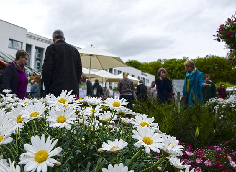 Farbenpracht vor grauem Himmel: Die Blumenbörse trotzte dem flauen Wetter.