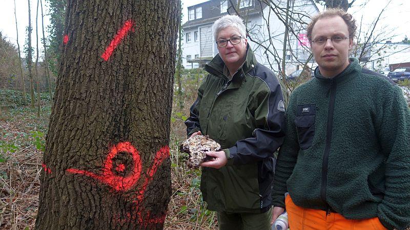 Was Revierförsterin Christiane Günthe in den Händen hält, ist der Rest eines Porlings, eines äußerst aggressiven Pilzes, den die bereits gekennzeichnete Eiche befallen hat.