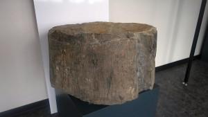 Teil eines versteinerten Baumstamms, zu Tage gefördert auf dem ehemaligen Bergwerk Grimberg 3/4 in Weddinghofen.