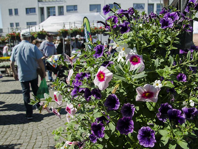 Blumenbörse14