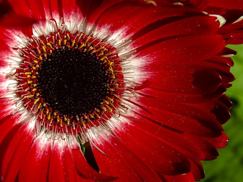 Blumenbörse21