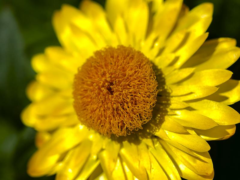 Blumenbörse28
