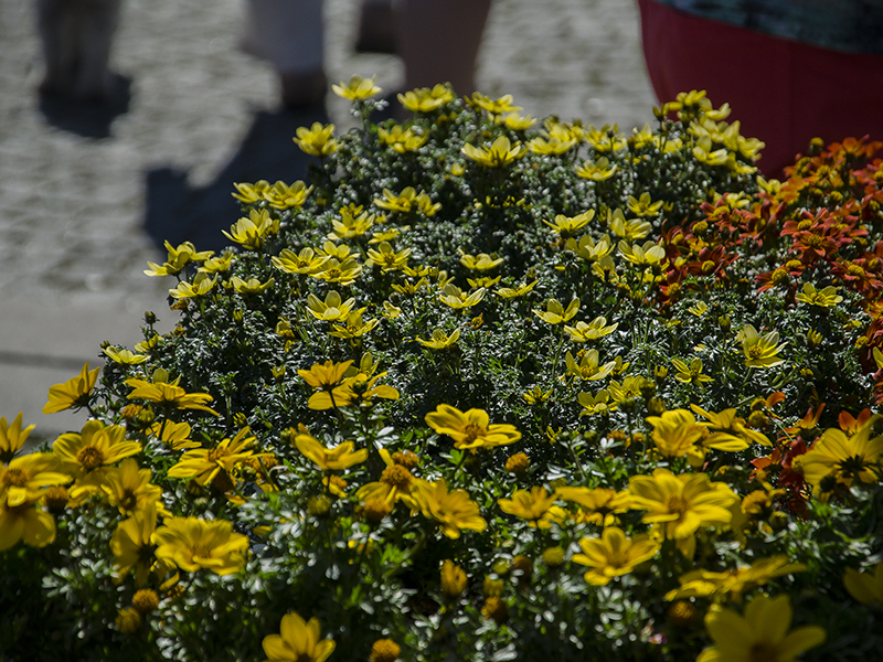 Blumenbörse9
