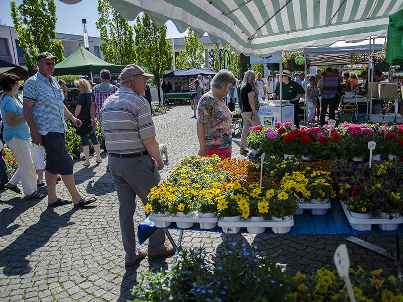 Die Qual der Wahl hatten die Besucher der 10. Blumenbörse an gut 40 Ständen mit prachtvollen Blütengewächsen und mehr.