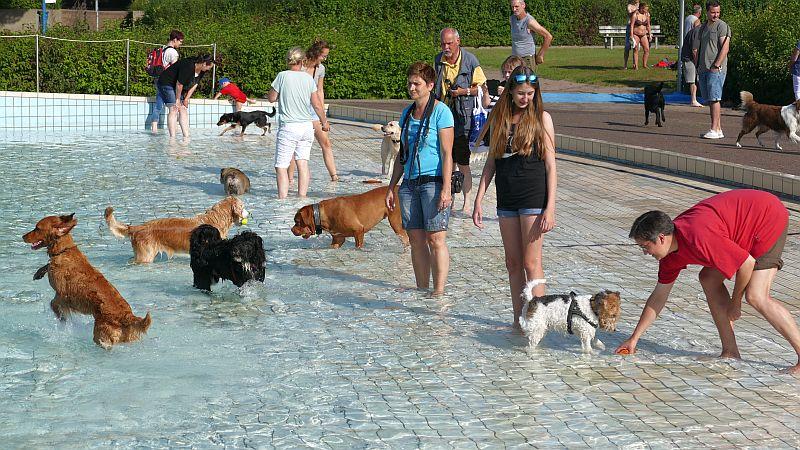 Hundeschwimmen (5)