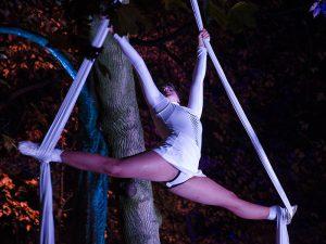 Akrobatik in den Bäumen des Stadtwaldes.