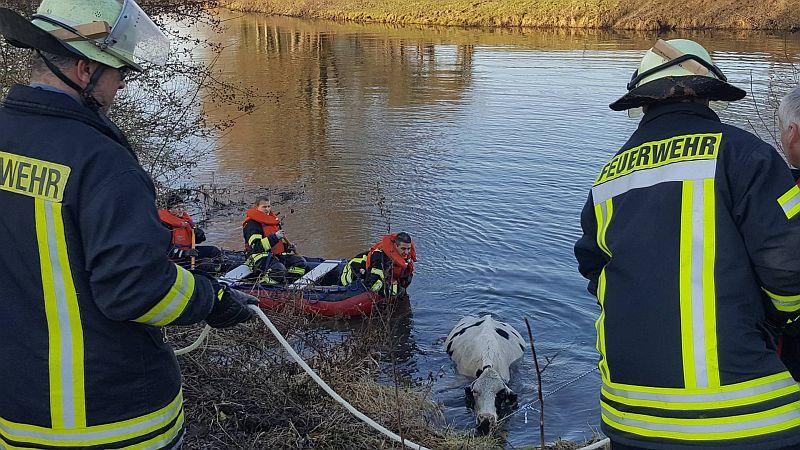 Dramatische Rettungsaktion an der Lippe: Eine hochträchtige Kuh stürzte ins Wasser. Fotos: Feuerwehr Oberaden.