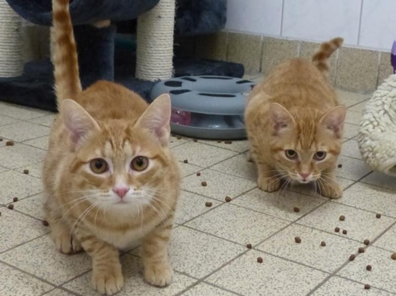 Magda und Lena suchen ein neues Zuhause.