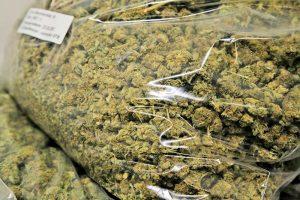 In Folien verpacktes Marihuana fanden Zollbeamte im Auto einer 57-jährigen Niederländerin.