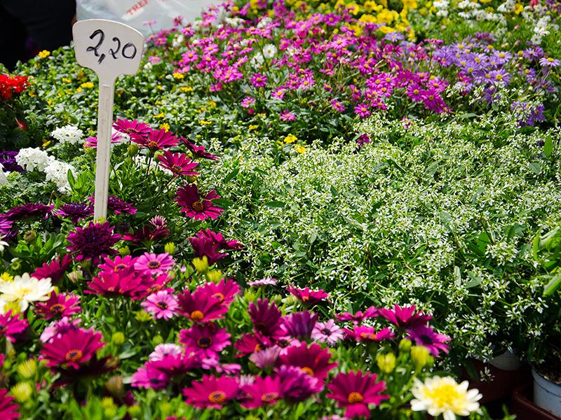 Blumenbörse13