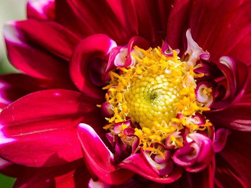 Blumenbörse15