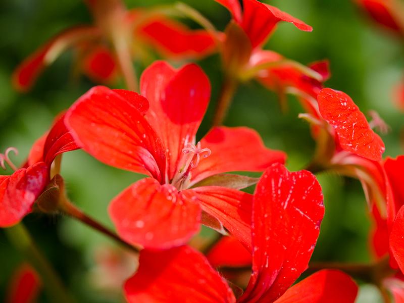 Blumenbörse16
