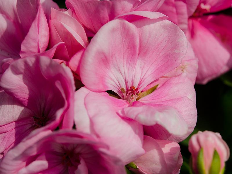 Blumenbörse17