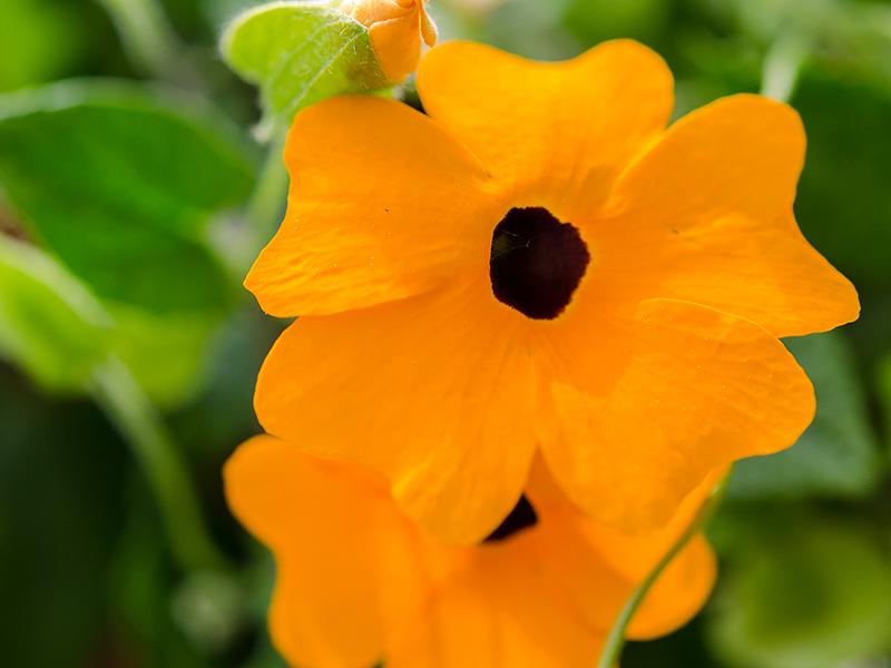 Blumenbörse18
