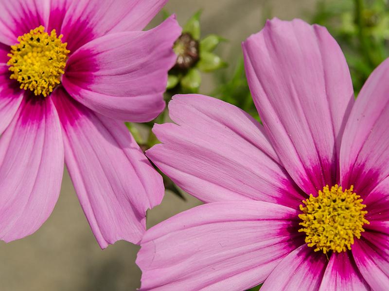 Blumenbörse19