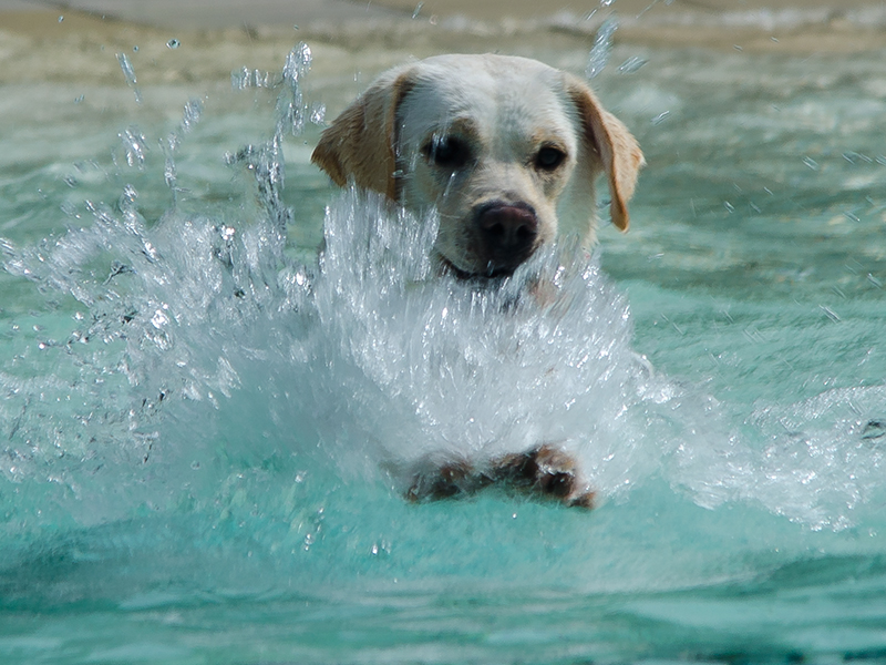 Hundeschwimmen1