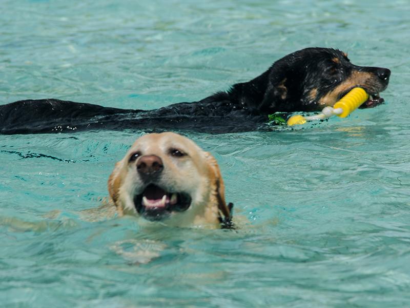 Hundeschwimmen13