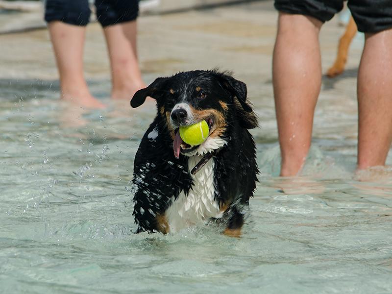 Hundeschwimmen15