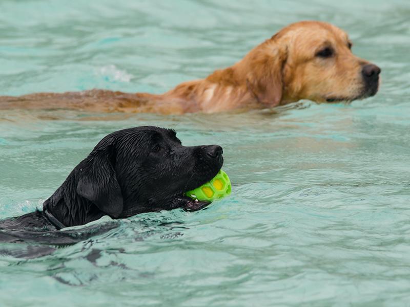 Hundeschwimmen17