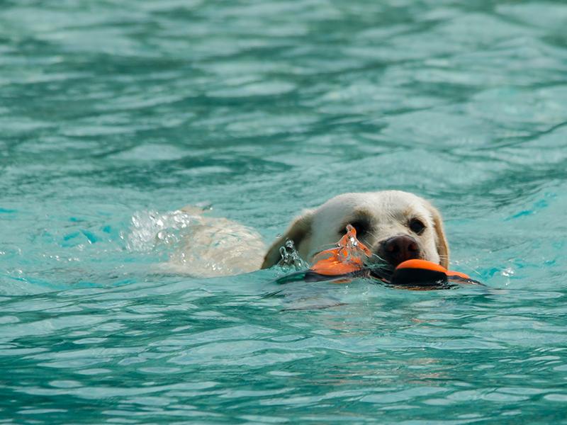 Hundeschwimmen2