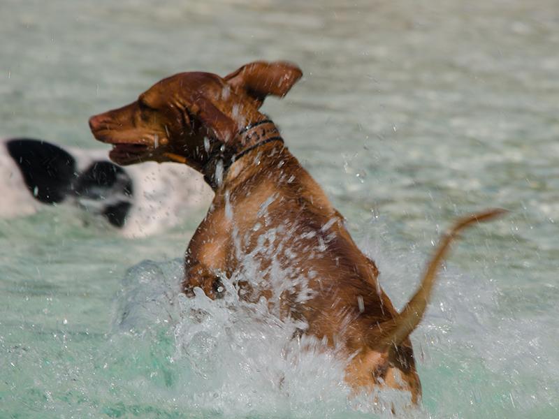Hundeschwimmen22