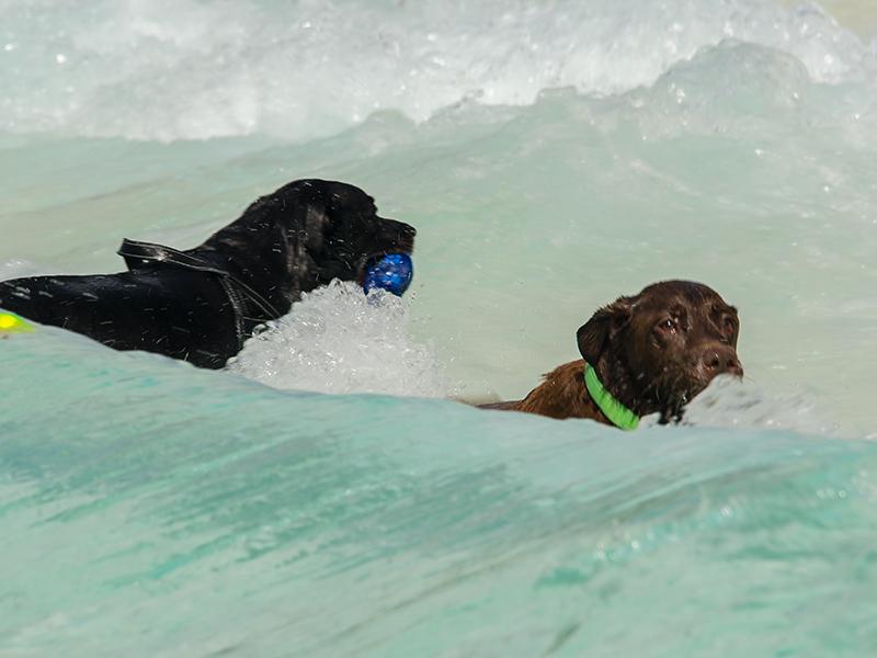 Hundeschwimmen25