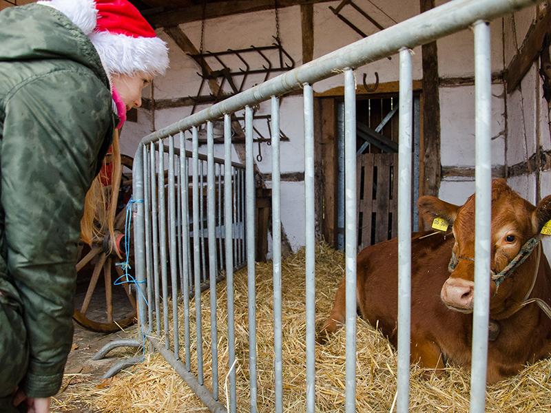WeihnachsmarktHeil11