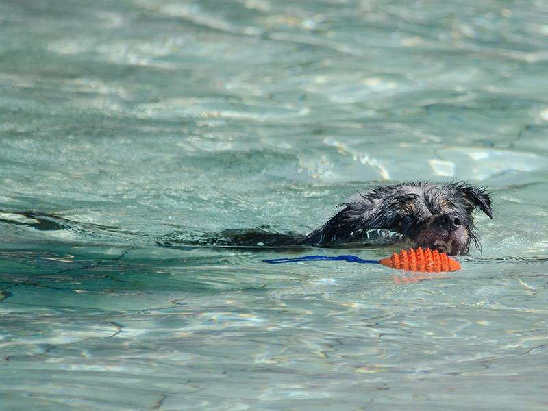 Hundeschwimmen_11