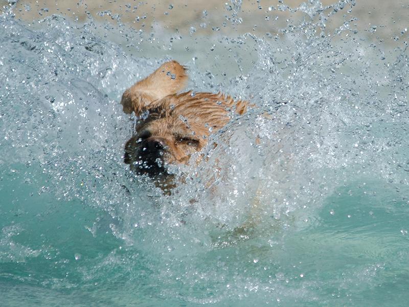 Hundeschwimmen_12