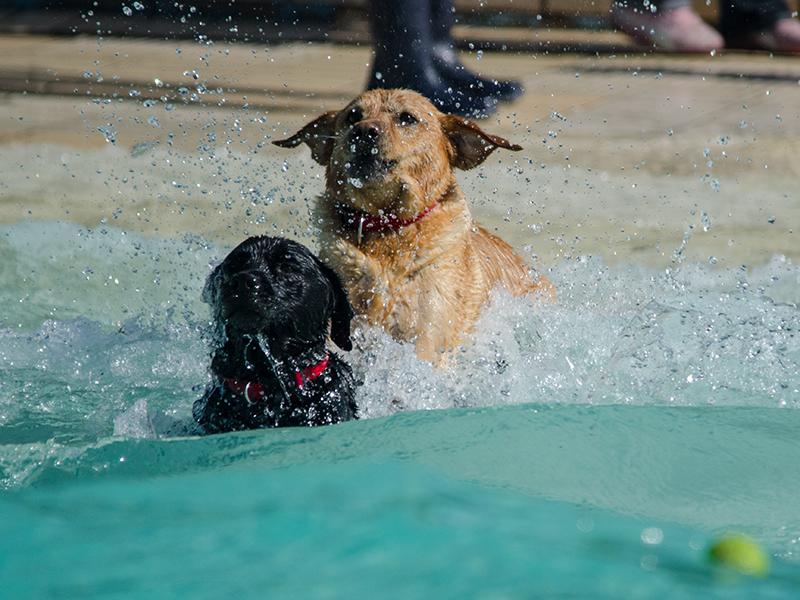 Hundeschwimmen_15