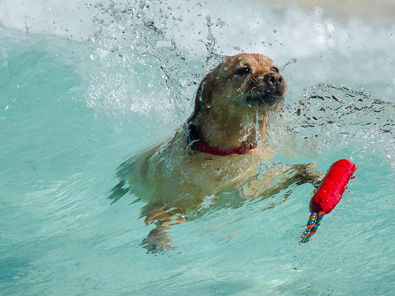 Hundeschwimmen_20