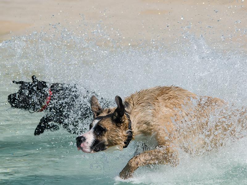 Hundeschwimmen_25