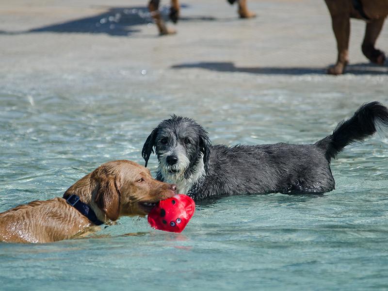 Hundeschwimmen_6