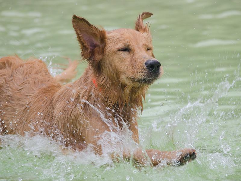 Hundeschwimmen_10