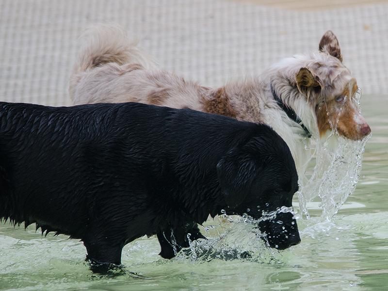 Hundeschwimmen_14