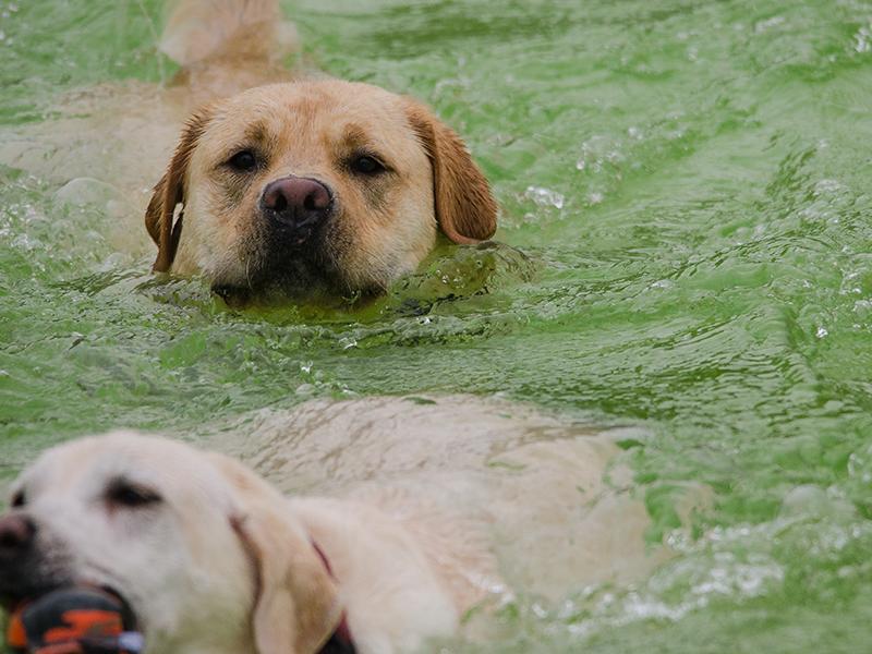 Hundeschwimmen_3