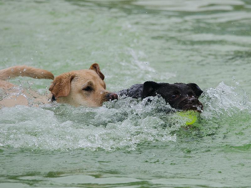Hundeschwimmen_5